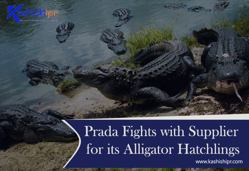 Prada is Still Fighting for its Alligator Hatchlings